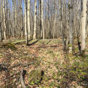 04-Sand-River-Area-Property-Forest-Floor-Carpeted-with-Spring-Beauties