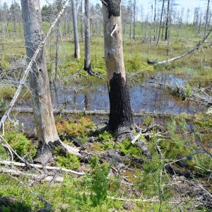 15-CLC-Little-Pike-Lake-Wetland