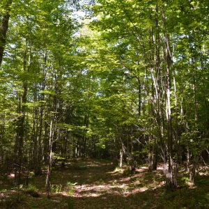 CLC-28-Timber-Forest-Road