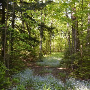 CLC-28-Timber-Forget-Me-Not-Lined-Property-Access