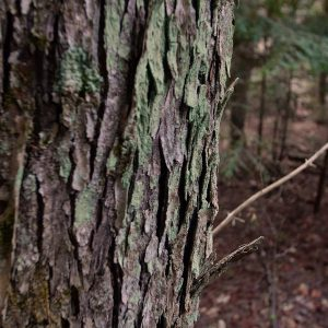 CLC-Greenway-Lake-Lichen-Covered-Tree-Trunk